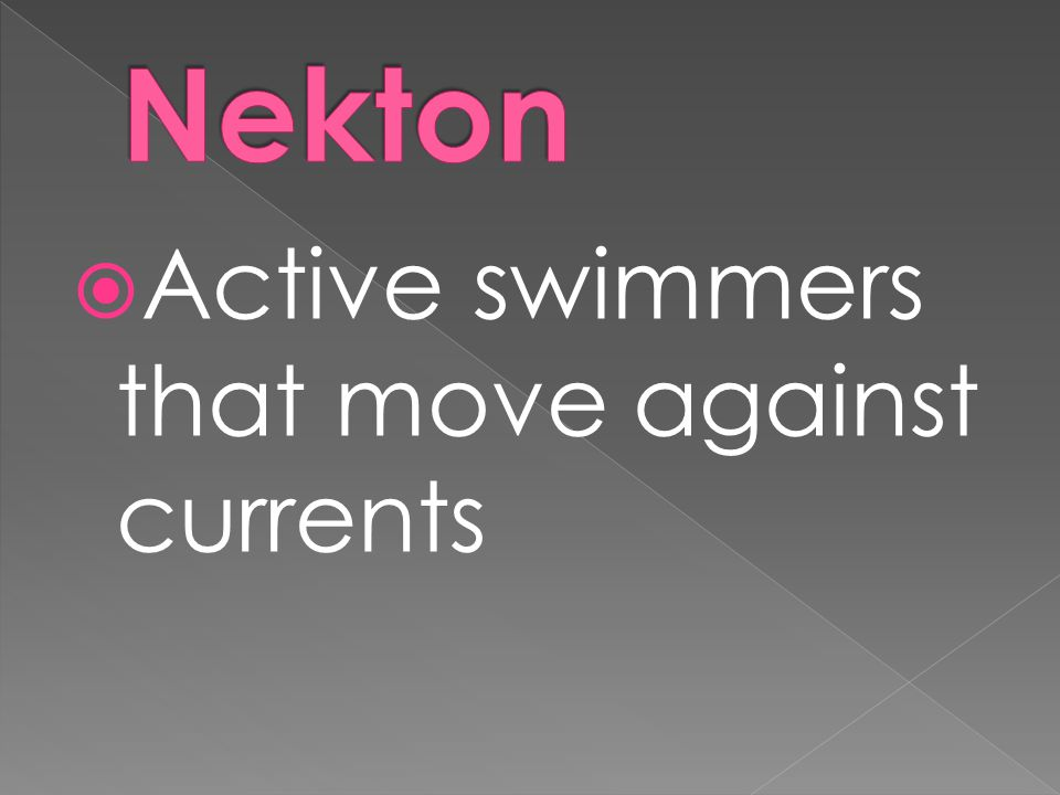  Active swimmers that move against currents