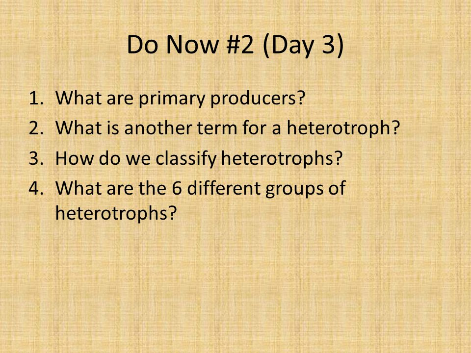 Do Now #2 (Day 3) 1.What are primary producers. 2.What is another term for a heterotroph.