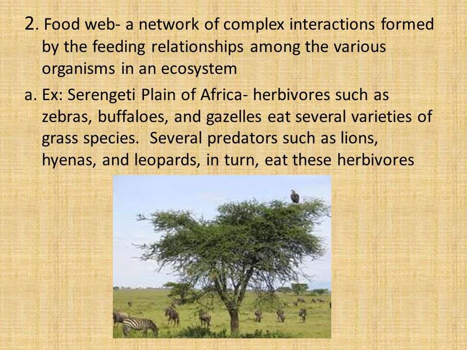 2. Food web- a network of complex interactions formed by the feeding relationships among the various organisms in an ecosystem a. Ex: Serengeti Plain