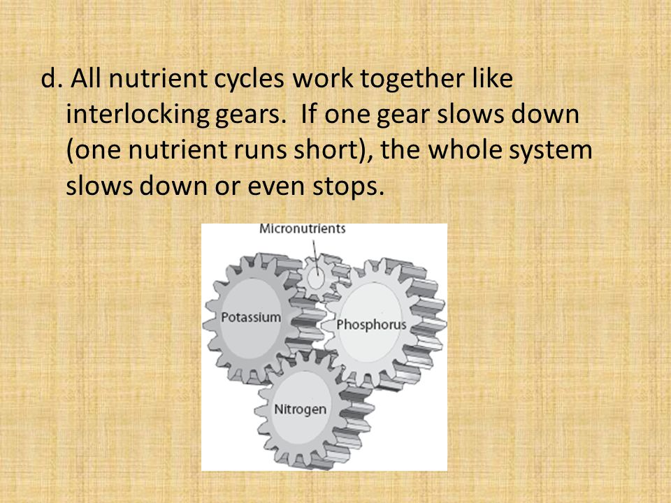 d. All nutrient cycles work together like interlocking gears.