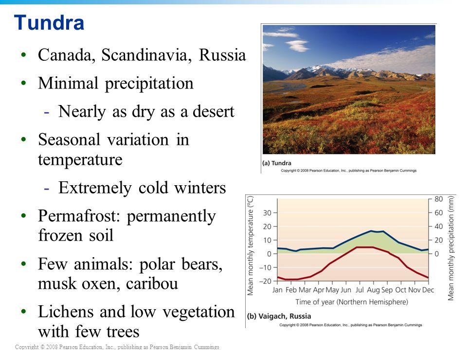 Copyright © 2008 Pearson Education, Inc., publishing as Pearson Benjamin Cummings Tundra Canada, Scandinavia, Russia Minimal precipitation -Nearly as