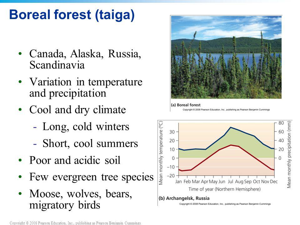 Copyright © 2008 Pearson Education, Inc., publishing as Pearson Benjamin Cummings Boreal forest (taiga) Canada, Alaska, Russia, Scandinavia Variation