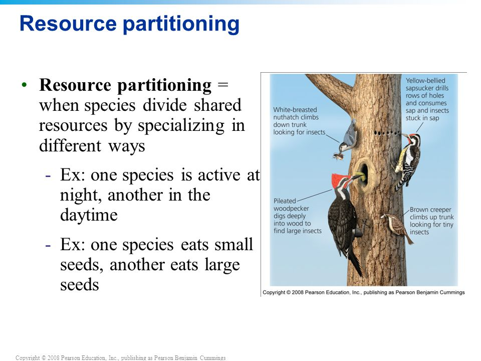 Copyright © 2008 Pearson Education, Inc., publishing as Pearson Benjamin Cummings Effects of resource partitioning Character displacement = competing species evolve physical characteristics that reflect their reliance on the portion of the resource they use -Ex: birds that eat larger seeds evolve larger bills -Ex: birds that eat smaller seeds evolve smaller bills Competition is reduced when two species become more different