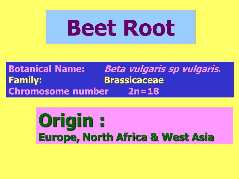 Origin : Europe, North Africa & West Asia Botanical Name:Beta vulgaris sp vulgaris. Family:Brassicaceae Chromosome number2n=18 Beet Root