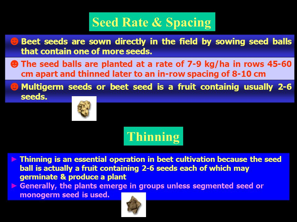 Seed Rate & Spacing Thinning ► Thinning is an essential operation in beet cultivation because the seed ball is actually a fruit containing 2-6 seeds e