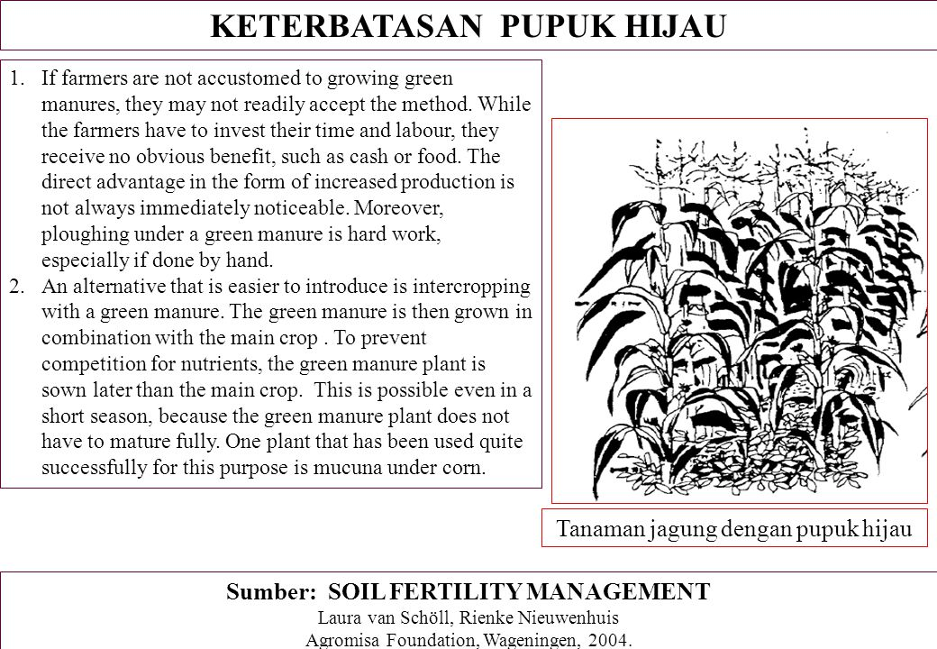 KETERBATASAN PUPUK HIJAU 1.If farmers are not accustomed to growing green manures, they may not readily accept the method. While the farmers have to i