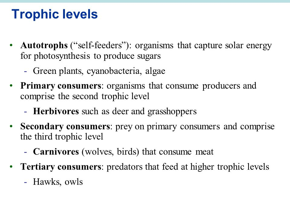 "Trophic levels Autotrophs (""self-feeders""): organisms that capture solar energy for photosynthesis to produce sugars -Green plants, cyanobacteria, alg"