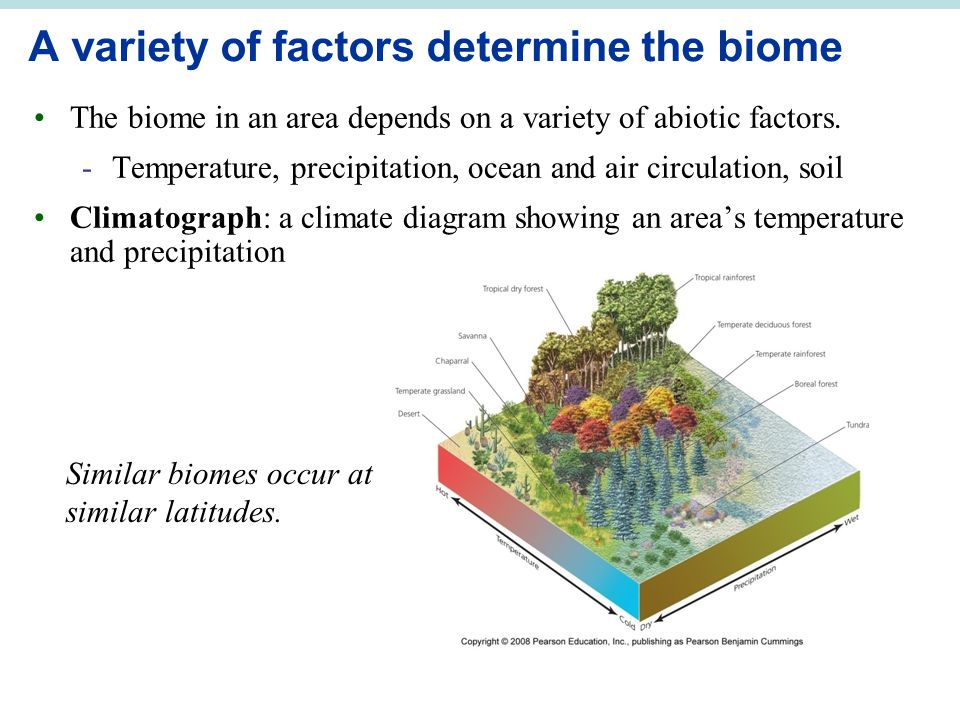 A variety of factors determine the biome The biome in an area depends on a variety of abiotic factors. -Temperature, precipitation, ocean and air circ