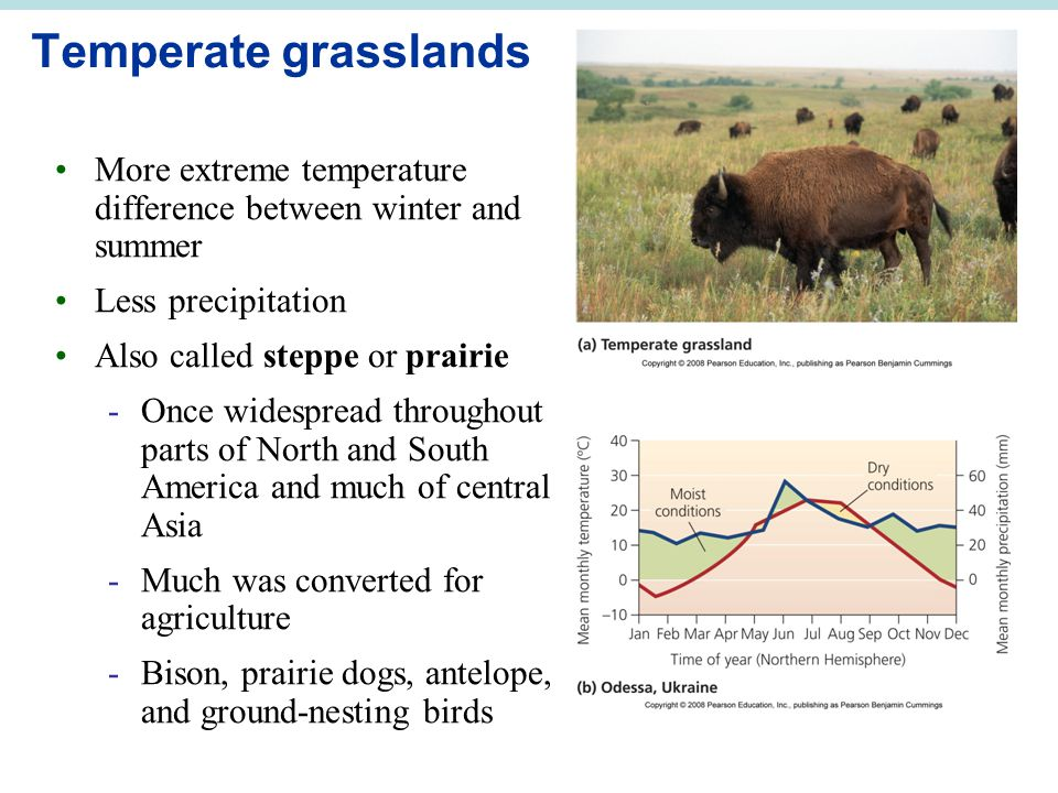 Temperate grasslands More extreme temperature difference between winter and summer Less precipitation Also called steppe or prairie -Once widespread t
