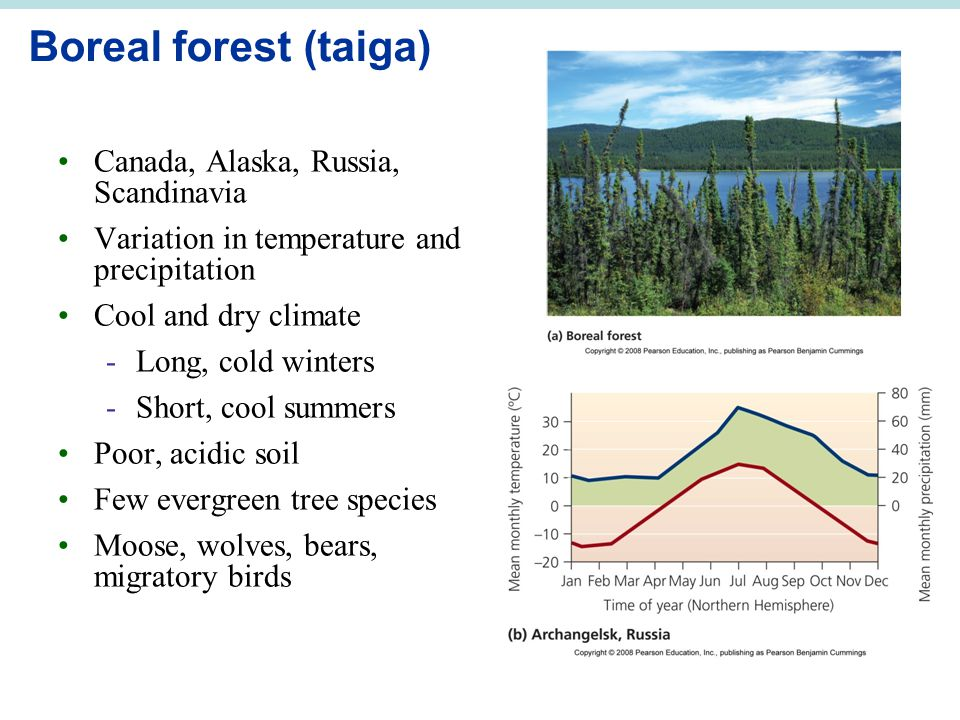 Boreal forest (taiga) Canada, Alaska, Russia, Scandinavia Variation in temperature and precipitation Cool and dry climate -Long, cold winters -Short,