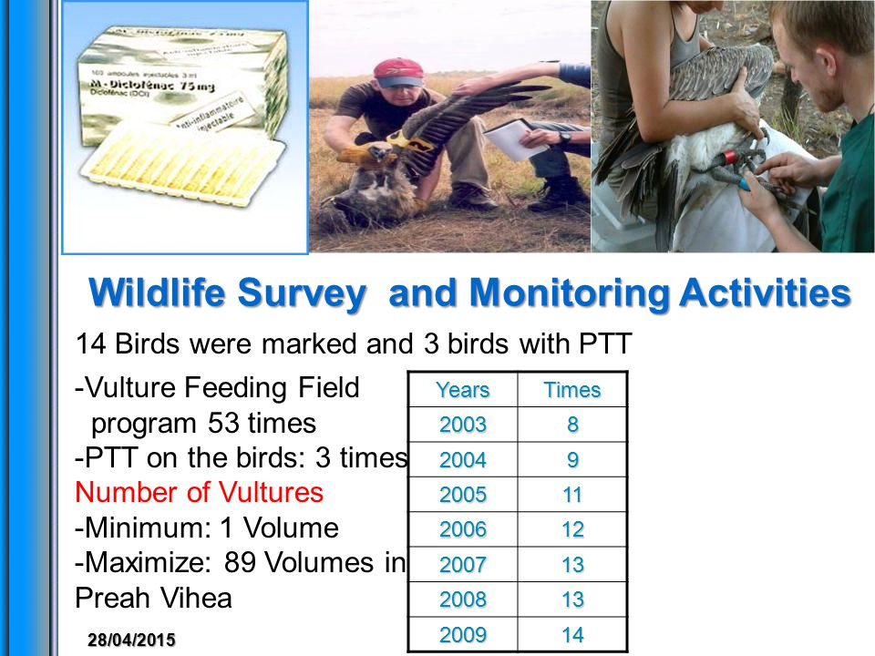 Wildlife Survey and Monitoring Activities 13 14 Birds were marked and 3 birds with PTTYearsTimes20038 20049 200511 200612 200713 200813 200914 -Vulture Feeding Field program 53 times -PTT on the birds: 3 times Number of Vultures -Minimum: 1 Volume -Maximize: 89 Volumes in Preah Vihea 28/04/2015