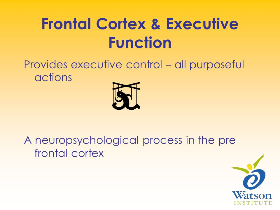 Frontal Cortex & Executive Function Provides executive control – all purposeful actions A neuropsychological process in the pre frontal cortex