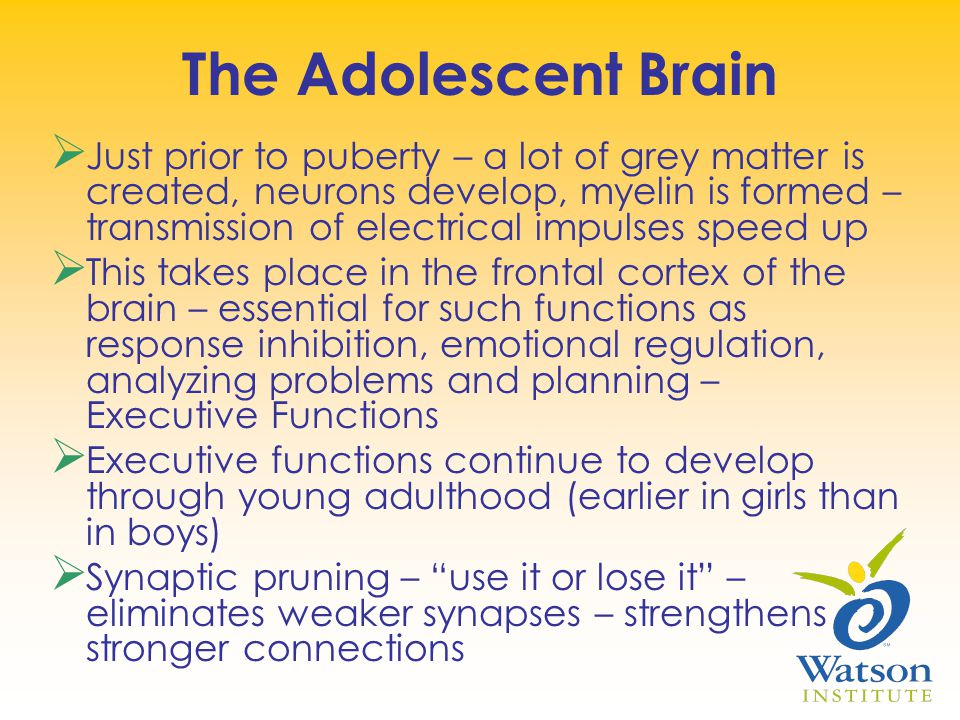 The Adolescent Brain  Just prior to puberty – a lot of grey matter is created, neurons develop, myelin is formed – transmission of electrical impulses speed up  This takes place in the frontal cortex of the brain – essential for such functions as response inhibition, emotional regulation, analyzing problems and planning – Executive Functions  Executive functions continue to develop through young adulthood (earlier in girls than in boys)  Synaptic pruning – use it or lose it – eliminates weaker synapses – strengthens stronger connections