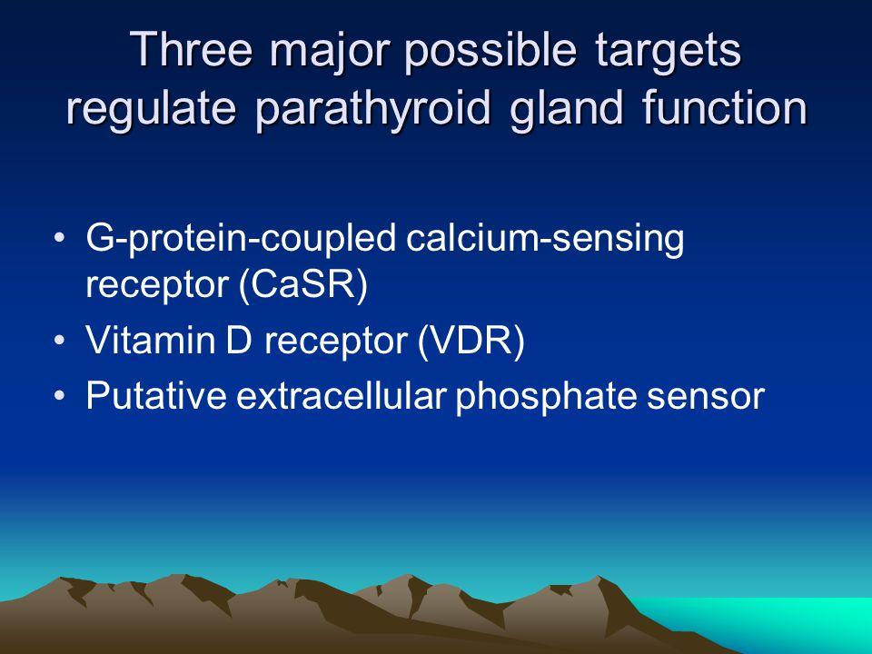 Three major possible targets regulate parathyroid gland function G-protein-coupled calcium-sensing receptor (CaSR) Vitamin D receptor (VDR) Putative extracellular phosphate sensor