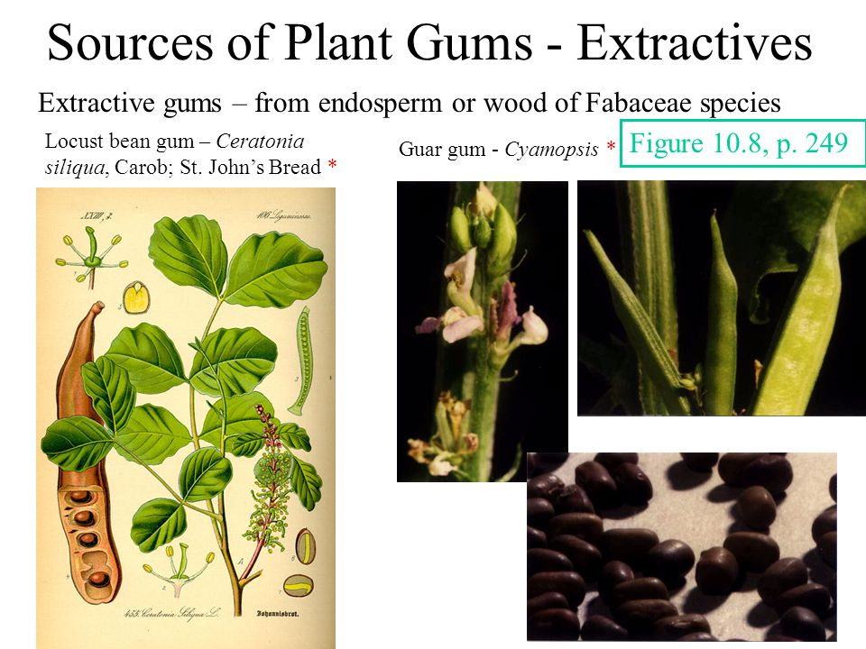 Sources of Plant Gums - Extractives Extractive gums – from endosperm or wood of Fabaceae species Locust bean gum – Ceratonia siliqua, Carob; St.