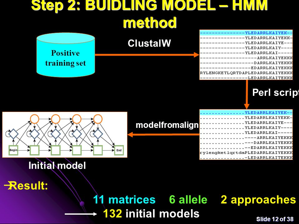 Slide 12 of 38 Step 2: BUIDLING MODEL – HMM method Positive training set ClustalW Perl script modelfromalign Initial model  Result: 11 matrices x 6 allele x 2 approaches = 132 initial models