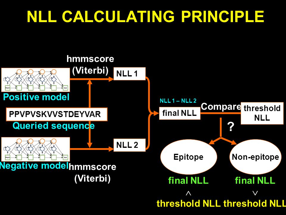 NLL CALCULATING PRINCIPLE Negative model Positive model PPVPVSKVVSTDEYVAR Queried sequence hmmscore (Viterbi) hmmscore (Viterbi) NLL 1 final NLL Compare Epitope .