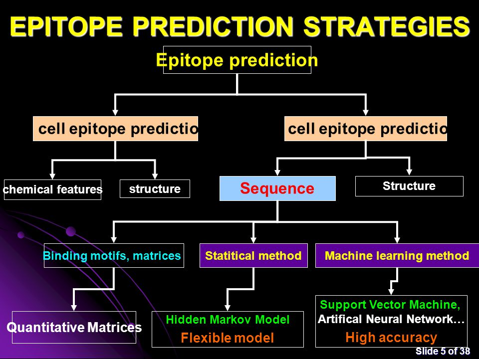 Slide 5 of 38 EPITOPE PREDICTION STRATEGIES Epitope prediction B cell epitope predictionT cell epitope prediction structure chemical features Sequence Structure Binding motifs, matrices Statitical methodMachine learning method Hidden Markov Model Flexible model Support Vector Machine, Artifical Neural Network… High accuracy Quantitative Matrices