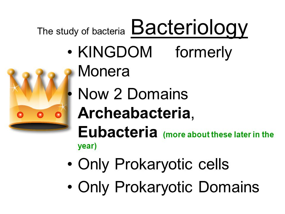 The study of bacteria Bacteriology KINGDOM formerly Monera Now 2 Domains Archeabacteria, Eubacteria (more about these later in the year) Only Prokaryotic cells Only Prokaryotic Domains