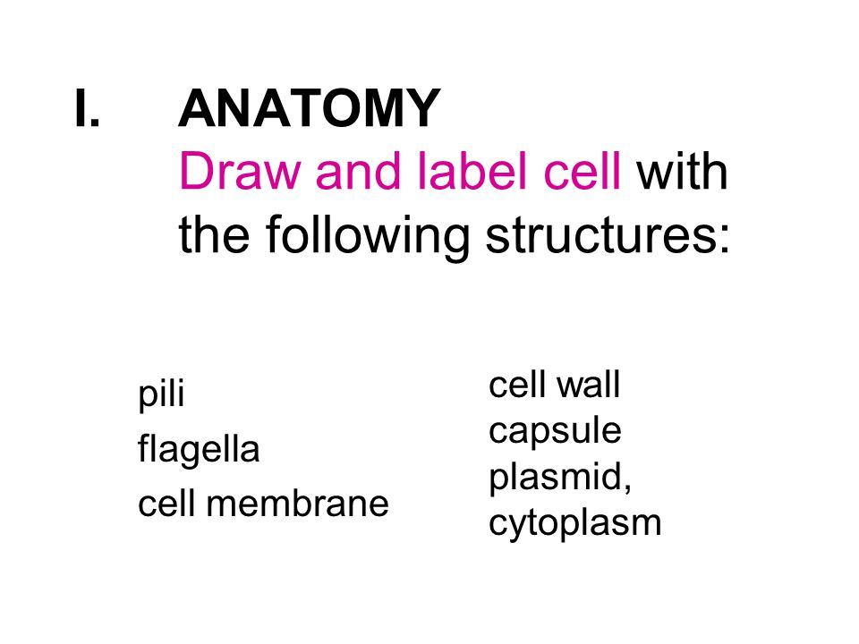 I.ANATOMY Draw and label cell with the following structures: pili flagella cell membrane cell wall capsule plasmid, cytoplasm