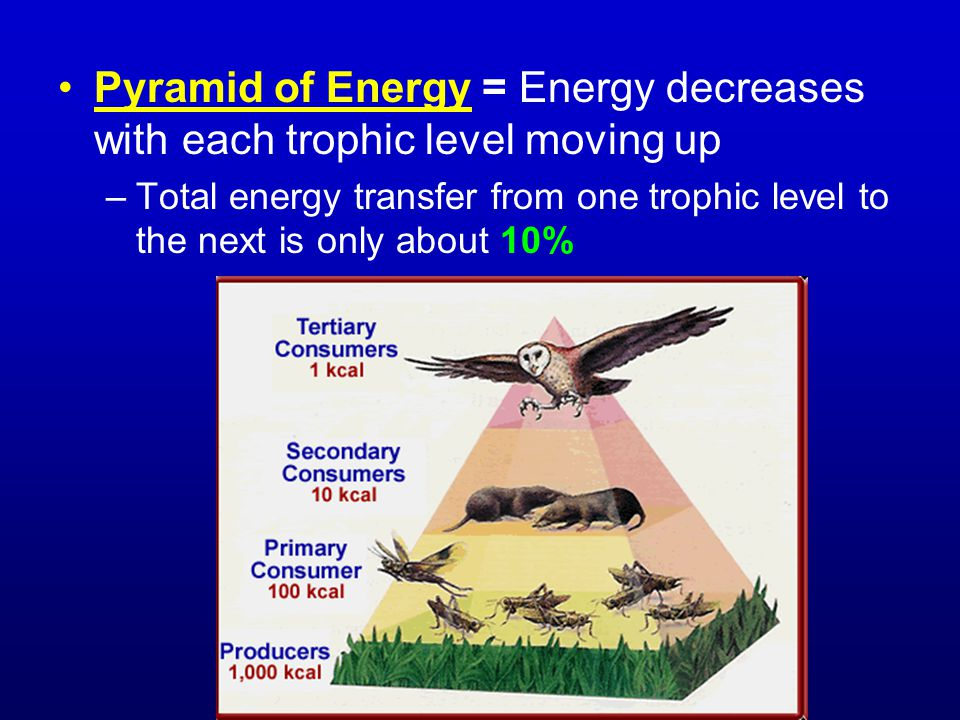 Pyramid of Energy = Energy decreases with each trophic level moving up –Total energy transfer from one trophic level to the next is only about 10%