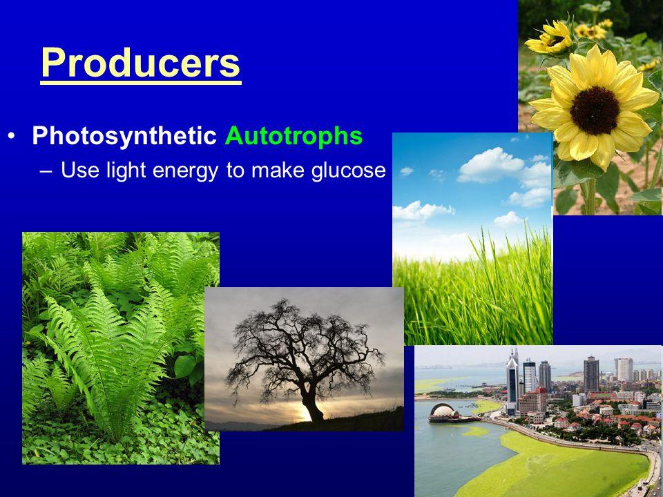 Producers Photosynthetic Autotrophs –Use light energy to make glucose