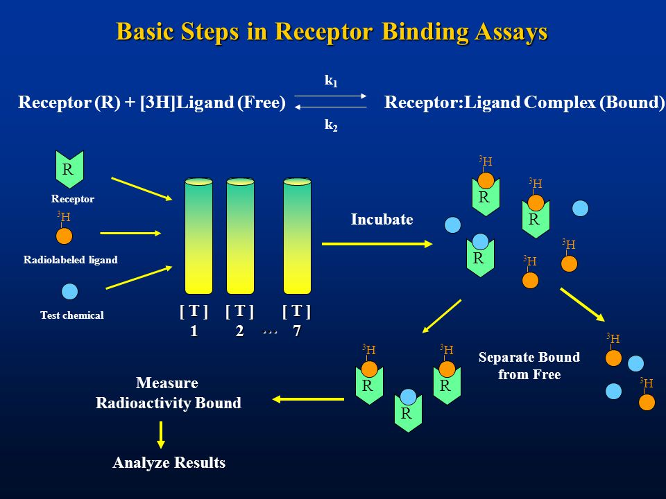 Basic Steps in Receptor Binding Assays Receptor (R) + [3H]Ligand (Free)Receptor:Ligand Complex (Bound) k1k1 k2k2 Incubate R R 3H3H 3H3H R 3H3H 3H3H 3H3H 3H3H R 3H3H R 3H3H R Separate Bound from Free Measure Radioactivity Bound Analyze Results Radiolabeled ligand Test chemical R 3H3H Receptor [ T ] 1 2 7 …