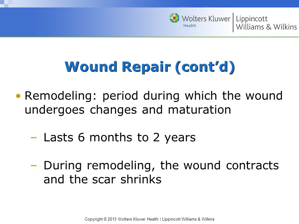 Copyright © 2013 Wolters Kluwer Health | Lippincott Williams & Wilkins Wound Repair (cont'd) Remodeling: period during which the wound undergoes chang