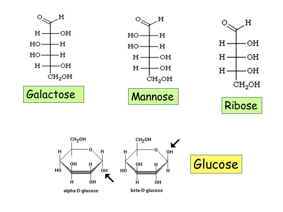 Mannose Ribose Galactose Glucose