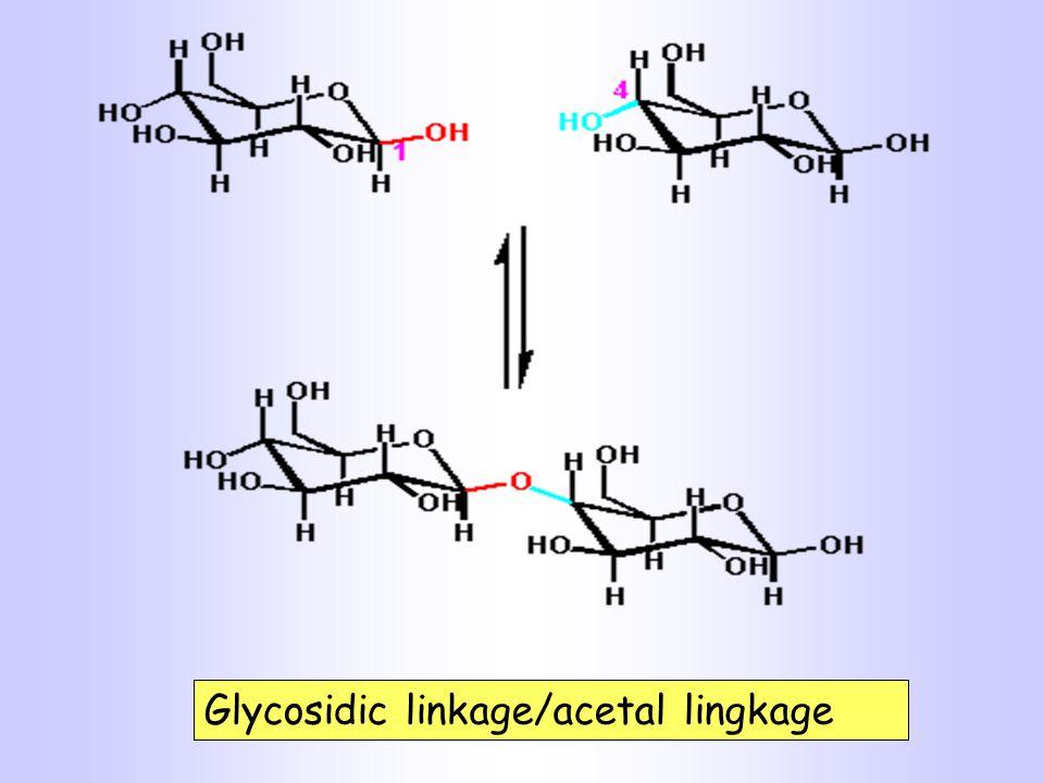 Glycosidic linkage/acetal lingkage