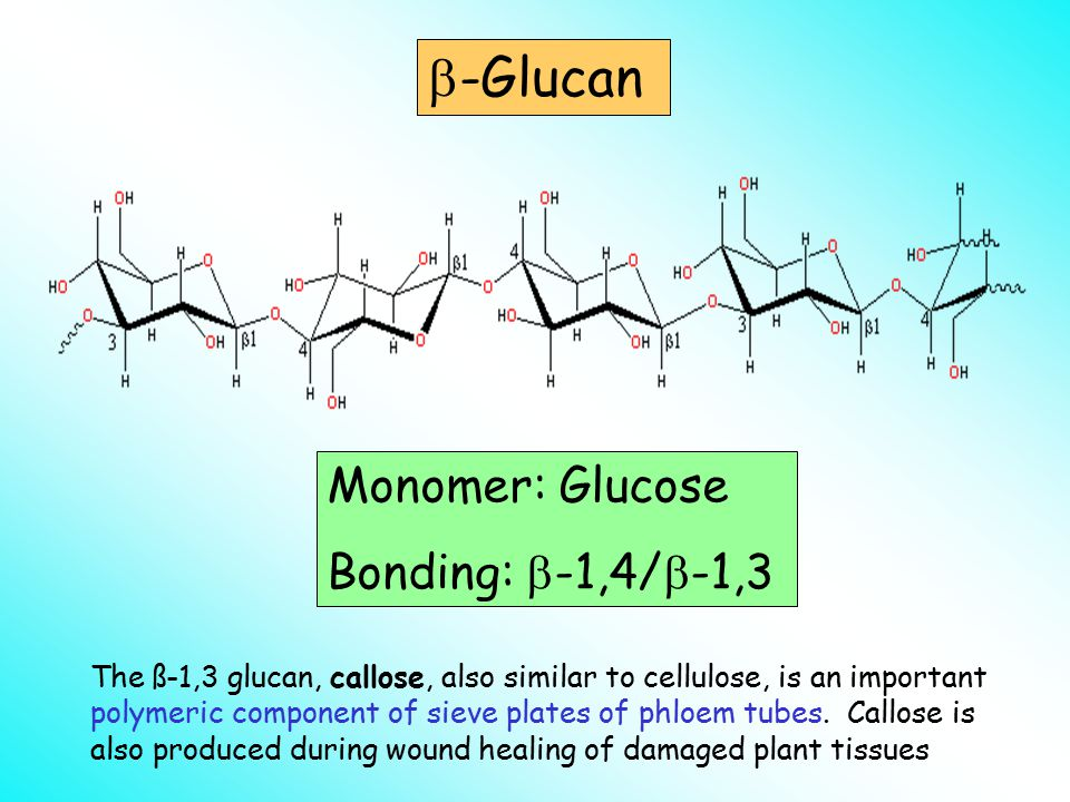  -Glucan Monomer: Glucose Bonding:  -1,4/  -1,3 The ß-1,3 glucan, callose, also similar to cellulose, is an important polymeric component of sieve plates of phloem tubes.