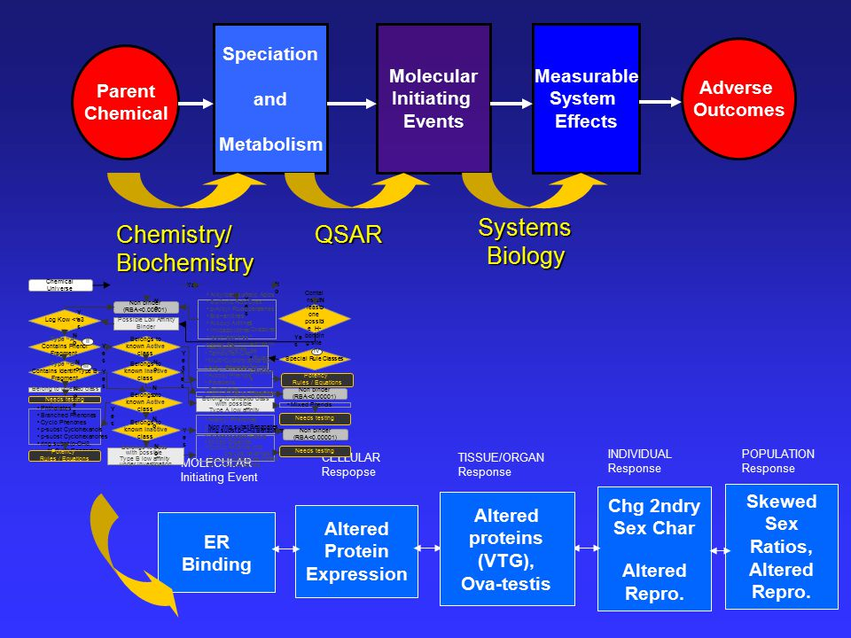 Molecular Initiating Events Speciation and Metabolism Measurable System Effects Adverse Outcomes Parent Chemical QSAR SystemsBiology Chemistry/Biochemistry ER Binding Altered Protein Expression Chg 2ndry Sex Char Altered Repro.