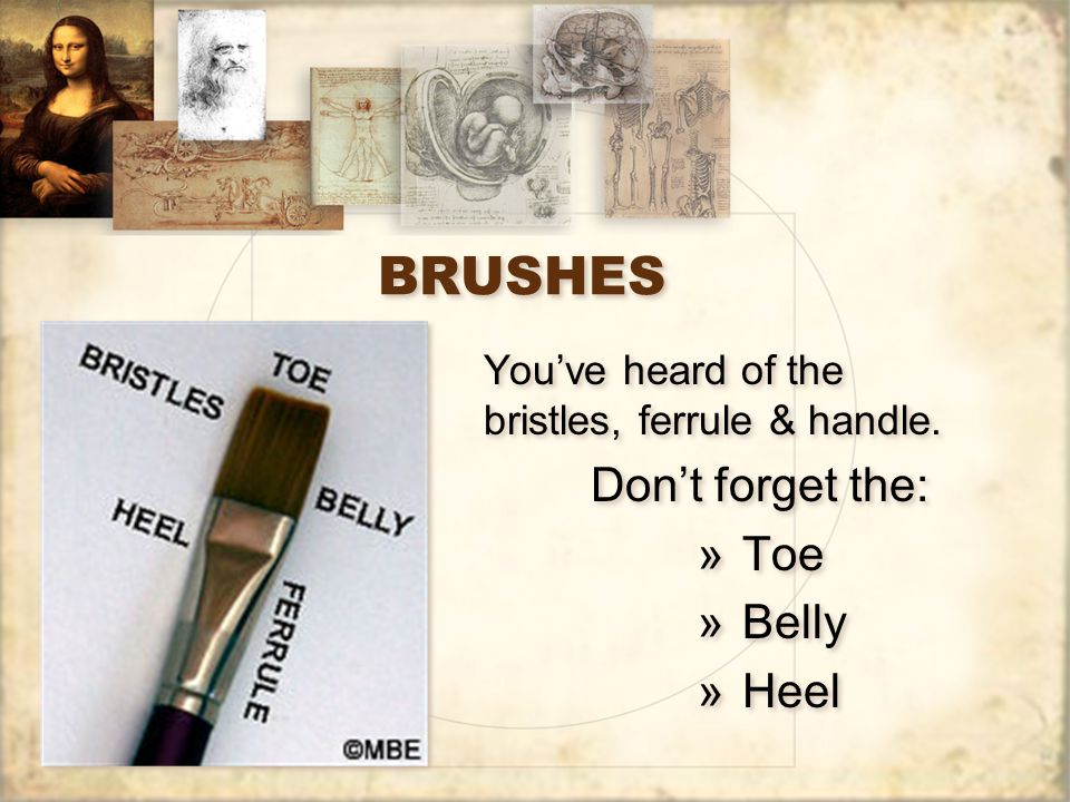 BRUSHES You've heard of the bristles, ferrule & handle. Don't forget the: »Toe »Belly »Heel