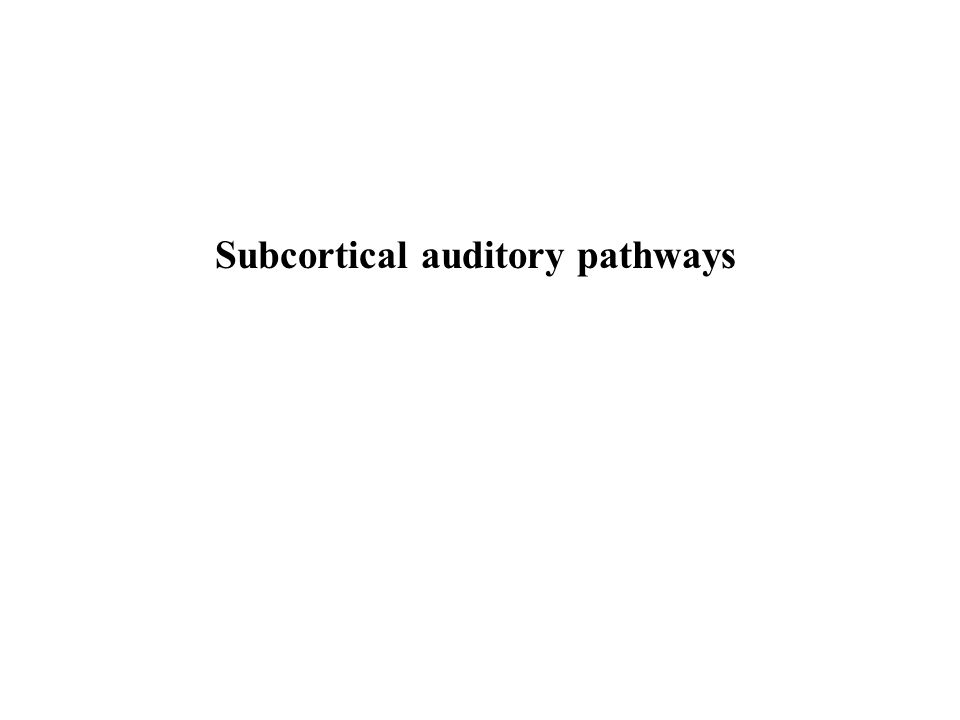 Subcortical auditory pathways