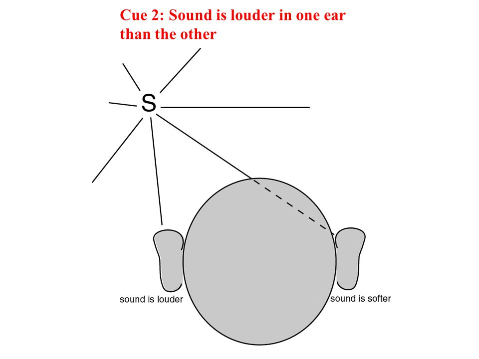 Cue 2: Sound is louder in one ear than the other