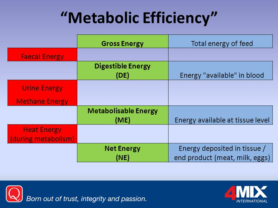 Metabolic Efficiency Gross Energy Total energy of feed Faecal Energy Digestible Energy (DE) Energy available in blood Urine Energy Methane Energy Metabolisable Energy (ME) Energy available at tissue level Heat Energy (during metabolism) Net Energy (NE) Energy deposited in tissue / end product (meat, milk, eggs)