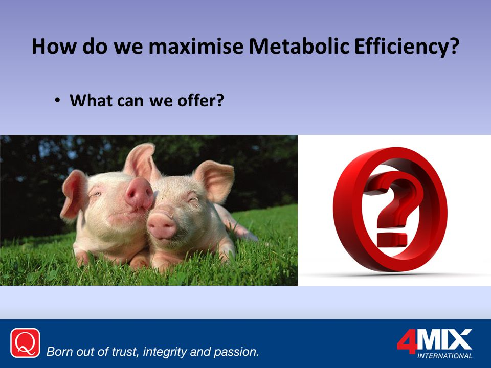 How do we maximise Metabolic Efficiency? What can we offer?