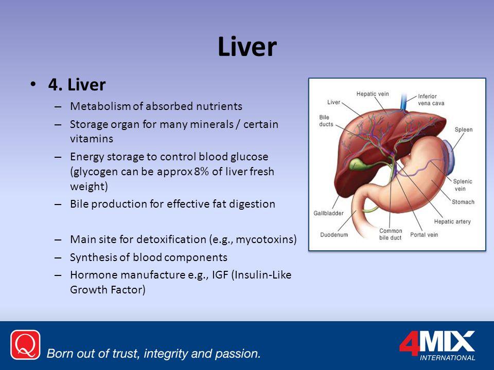 Liver 4.