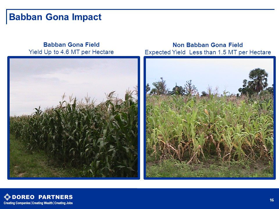 Babban Gona Impact 16 Babban Gona Field Yield Up to 4.6 MT per Hectare Non Babban Gona Field Expected Yield Less than 1.5 MT per Hectare 16