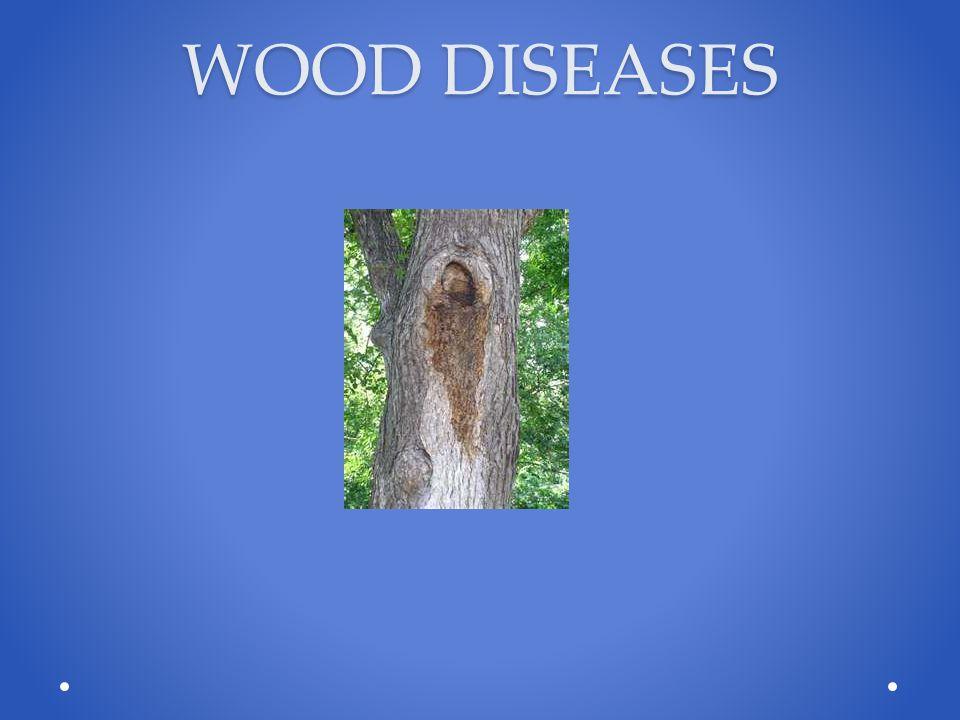 WOOD DISEASES