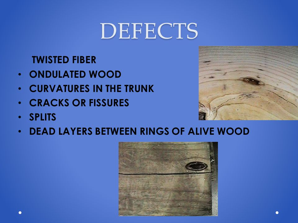 DEFECTS TWISTED FIBER ONDULATED WOOD CURVATURES IN THE TRUNK CRACKS OR FISSURES SPLITS DEAD LAYERS BETWEEN RINGS OF ALIVE WOOD