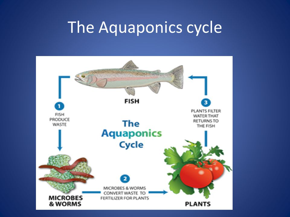 Exit Slip-September 10, 2013 1)What is the difference between heterotrophs and autotrophs.