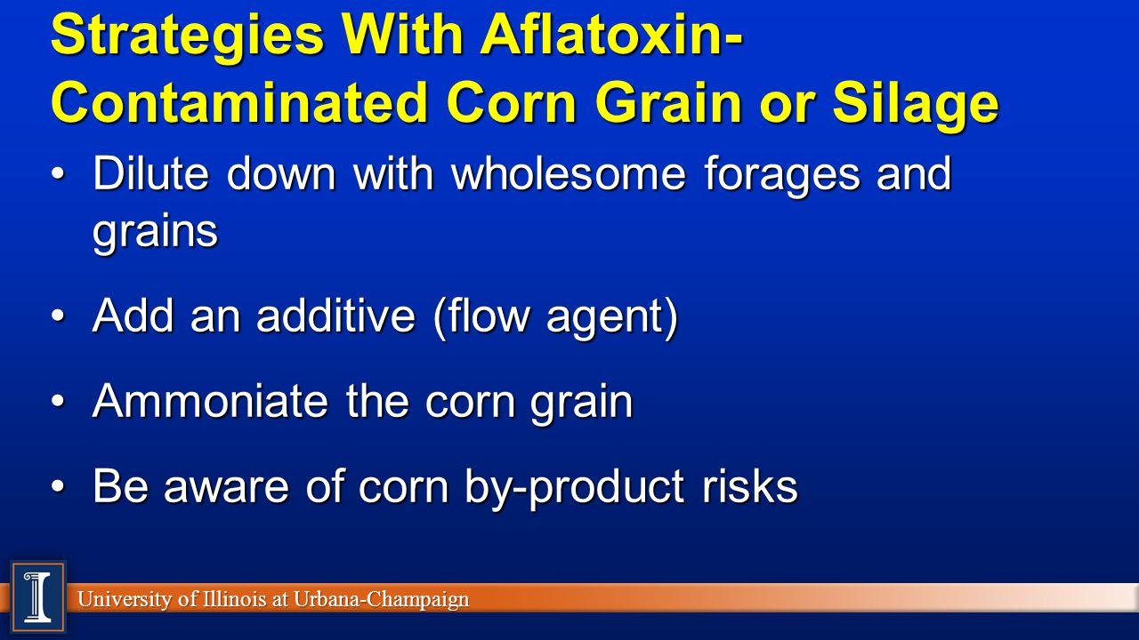 University of Illinois at Urbana-Champaign Strategies With Aflatoxin- Contaminated Corn Grain or Silage Dilute down with wholesome forages and grainsDilute down with wholesome forages and grains Add an additive (flow agent)Add an additive (flow agent) Ammoniate the corn grainAmmoniate the corn grain Be aware of corn by-product risksBe aware of corn by-product risks