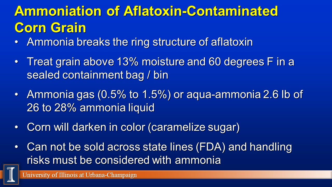University of Illinois at Urbana-Champaign Ammoniation of Aflatoxin-Contaminated Corn Grain Ammonia breaks the ring structure of aflatoxinAmmonia breaks the ring structure of aflatoxin Treat grain above 13% moisture and 60 degrees F in a sealed containment bag / binTreat grain above 13% moisture and 60 degrees F in a sealed containment bag / bin Ammonia gas (0.5% to 1.5%) or aqua-ammonia 2.6 lb of 26 to 28% ammonia liquidAmmonia gas (0.5% to 1.5%) or aqua-ammonia 2.6 lb of 26 to 28% ammonia liquid Corn will darken in color (caramelize sugar)Corn will darken in color (caramelize sugar) Can not be sold across state lines (FDA) and handling risks must be considered with ammoniaCan not be sold across state lines (FDA) and handling risks must be considered with ammonia