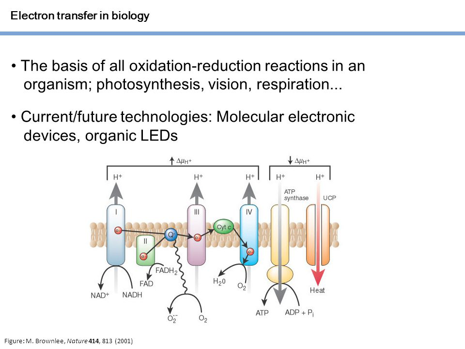 Electron transfer in biology The basis of all oxidation-reduction reactions in an organism; photosynthesis, vision, respiration...