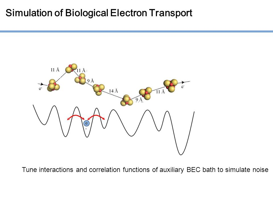Simulation of Biological Electron Transport Tune interactions and correlation functions of auxiliary BEC bath to simulate noise