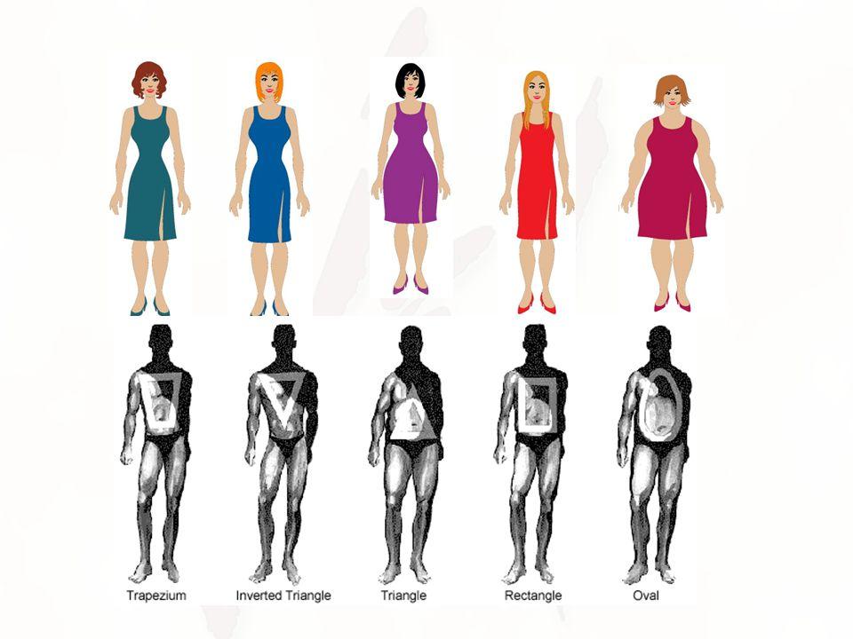 BODY TYPE= VERTICAL BODY TYPES HORIZONTAL BODY TYPES