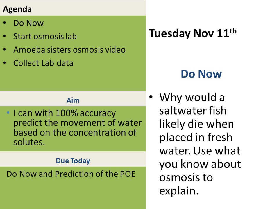 Agenda Do Now Start osmosis lab Amoeba sisters osmosis video Collect Lab data Tuesday Nov 11 th Why would a saltwater fish likely die when placed in f