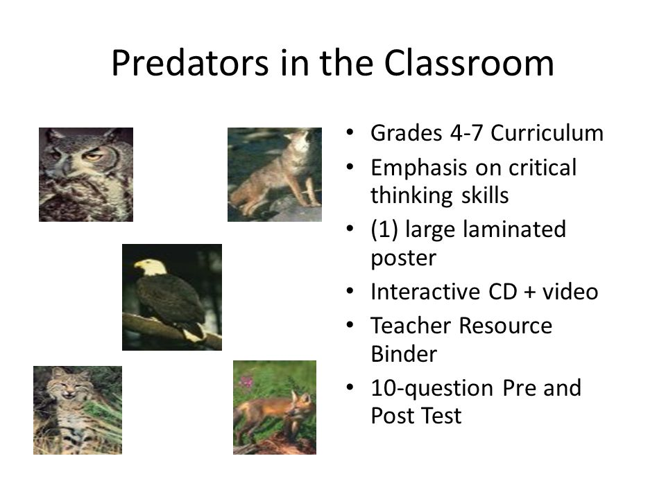 Predators in the Classroom Grades 4-7 Curriculum Emphasis on critical thinking skills (1) large laminated poster Interactive CD + video Teacher Resour