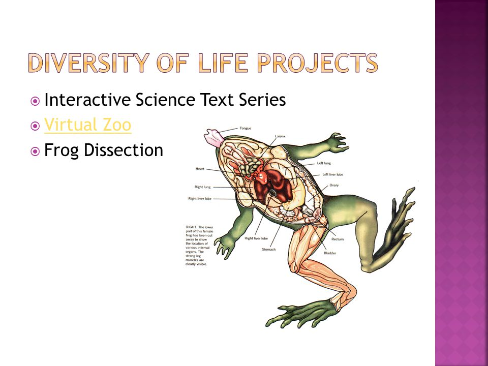  Interactive Science Text Series  Virtual Zoo Virtual Zoo  Frog Dissection